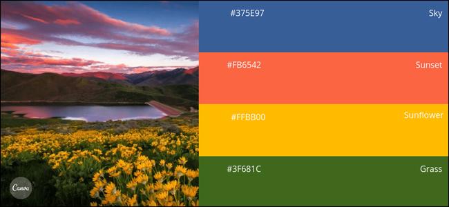 Échantillon de palette de couleurs Canva