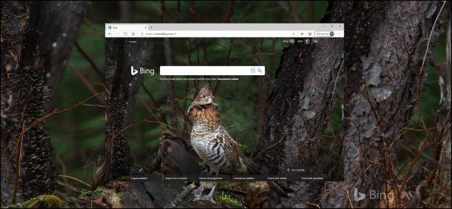 Une photo Bing d'un oiseau comme arrière-plan du bureau Windows 10.