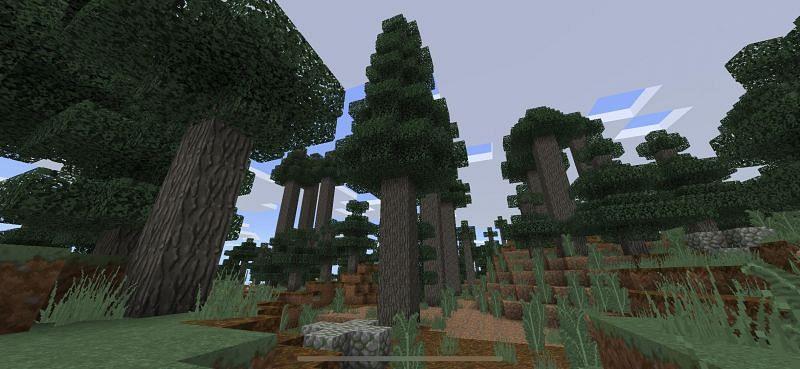 Des loups peuvent être trouvés dans le biome de la taïga des arbres géants (Image via Reddit)