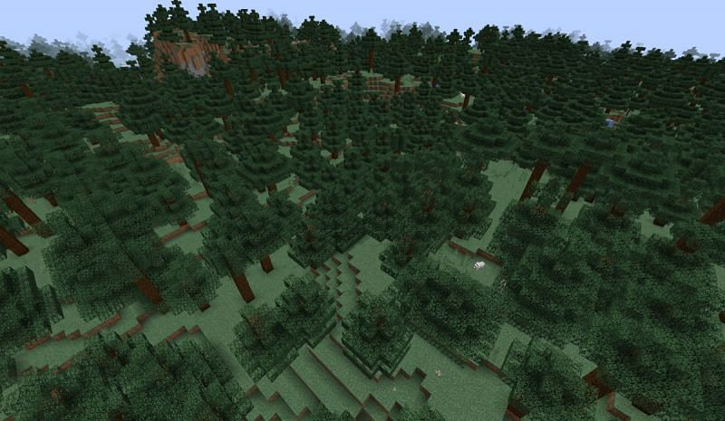 Les loups apparaissent dans tous les biomes forestiers à l'exception de la forêt de fleurs (Image via Minecraft)